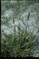 weedlist_b071[1]