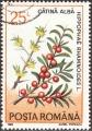 strom2303.jpg