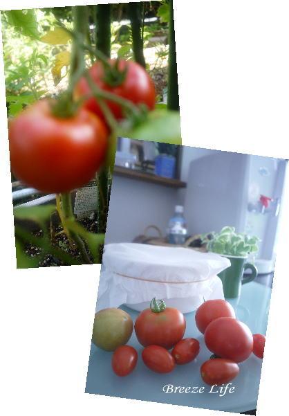 tomato140704.jpg