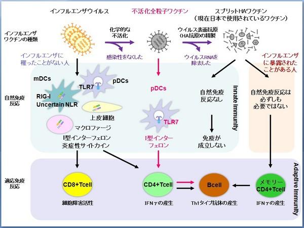 2010-0404_Ishii_ScienceTM-thumb-600x451-1624.jpg