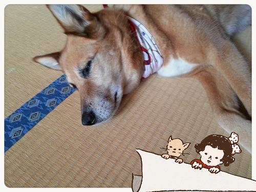 LINEcamera_share_2014-07-15-15-50-38.jpg
