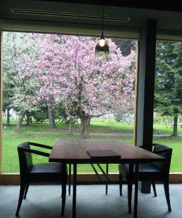 20140516桜①