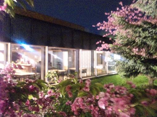 20140516桜②