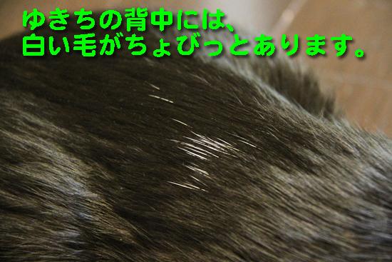 IMG_0316_R白い毛がちょびっとあります。
