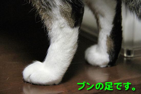 IMG_0414_Rブンの足です。