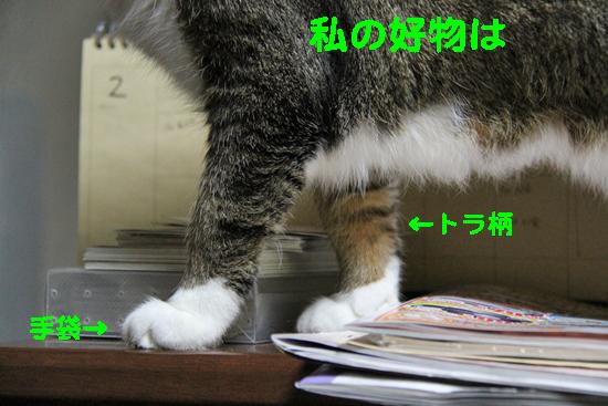 IMG_0427_R私の好物はトラ柄手袋