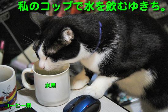 IMG_0203_R私のコップで水を飲むゆきち。