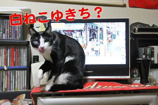 IMG_0248_R白ねこゆきち?