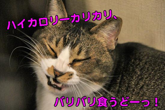 IMG_0919_Rハイカロリーカリカリバリバリ食うどーっ!