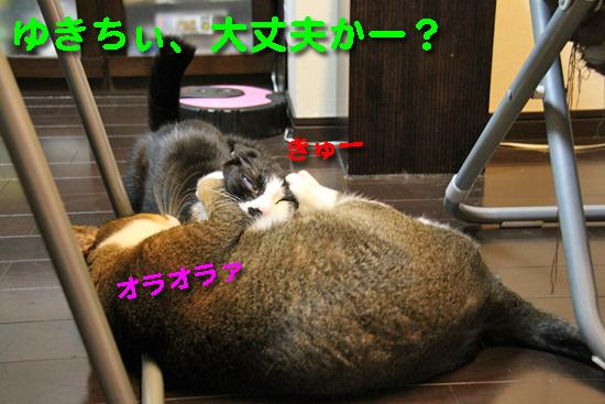 IMG_0089_Rゆきちぃ、大丈夫かー?
