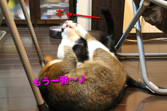 IMG_0107_Rもう一発~♪キャー