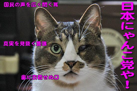 IMG_0210_R日本にゃんこ党や!