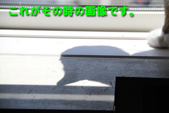IMG_0135_Rこれがその時の画像です。