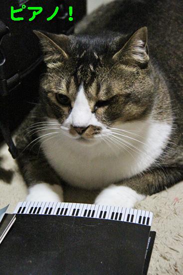 IMG_0127_Rブンピアノピアノ!