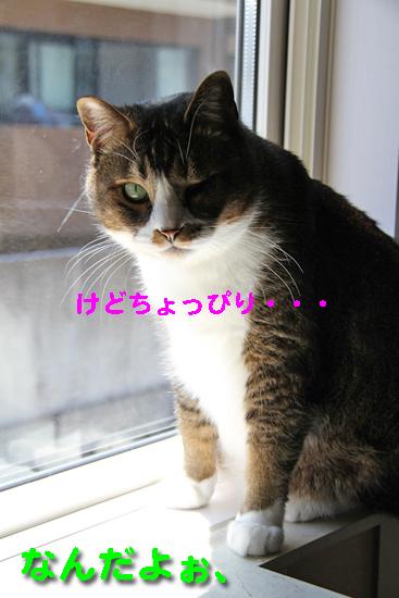 IMG_0147_Rけどちょっぴり・・・