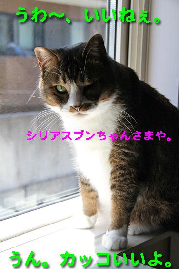 IMG_0146_Rうわ~、いいねぇ。