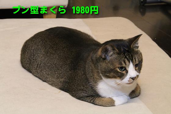 IMG_1098_Rブン型まくら1980円