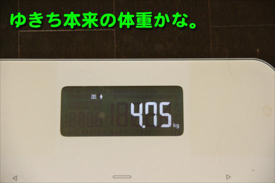 IMG_0025_Rゆきち本来の体重かな。
