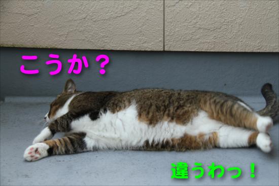 IMG_0081_Rこうか?違うわっ!