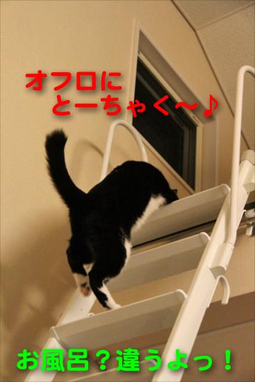 IMG_0295_Rお風呂?違うよっ!