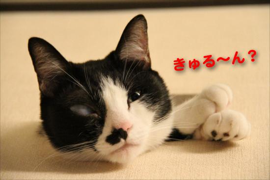 IMG_0313_Rきゅる~ん?