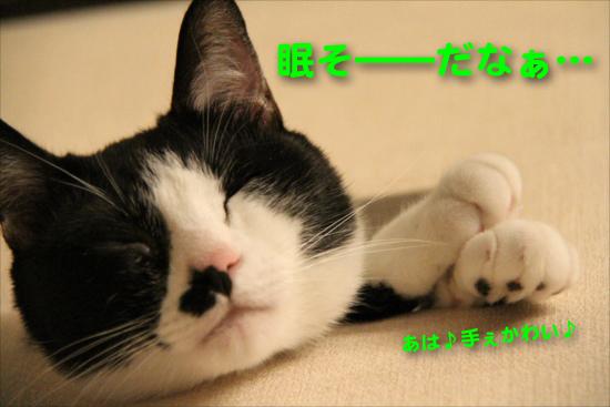 IMG_0319_R眠そ――だなぁ・・・