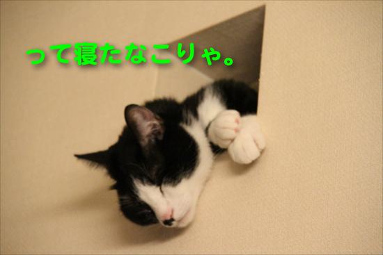 IMG_0320_Rって寝たなこりゃ。