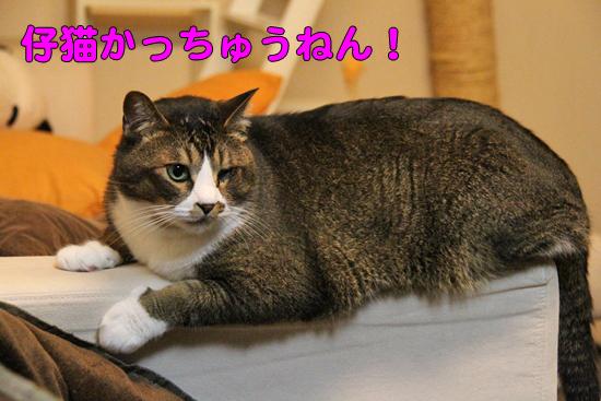 IMG_0069_R仔猫かっちゅうねん!