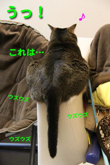 IMG_0023_Rうっ!のコピー