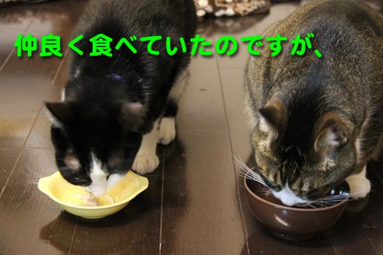 IMG_0028_R仲良く食べていたのですが、