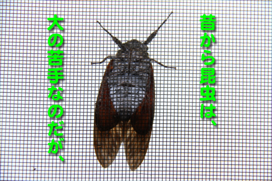IMG_0230_R昔から昆虫は、