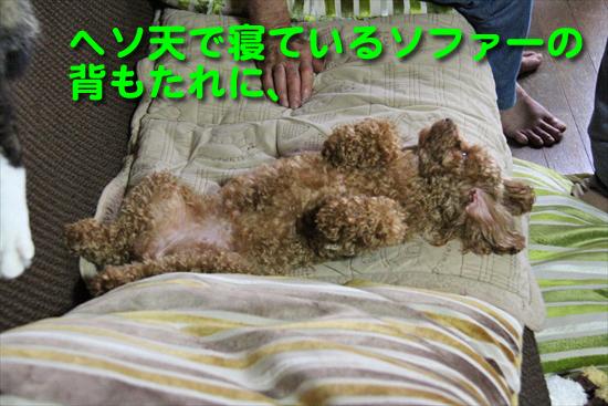 IMG_1086_Rヘソ天で寝ているソファーの