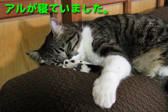 IMG_1088_Rアルが寝ていました。