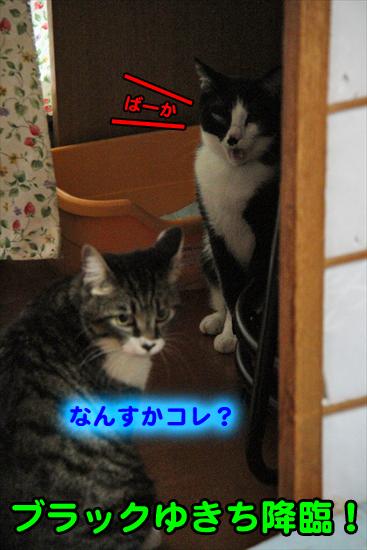 IMG_1064_Rブラックゆきち降臨!