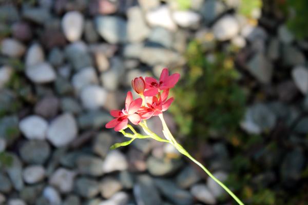 03花 のコピー