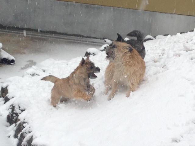 2013_2雪の中のクーチップキャン1