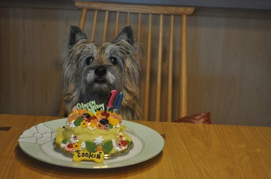 合同誕生日会クッキー10歳