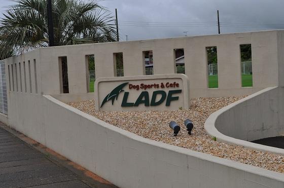LADF1