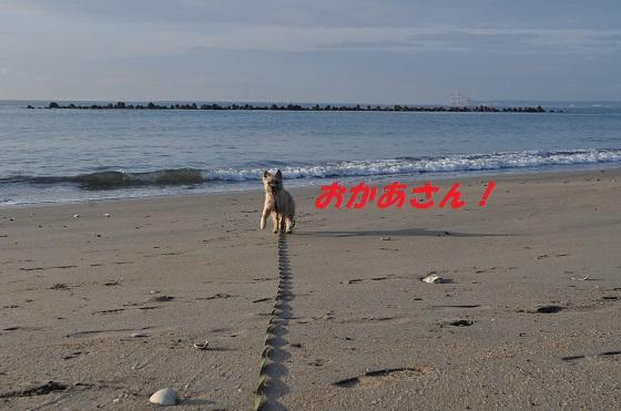 20140706御前崎海4