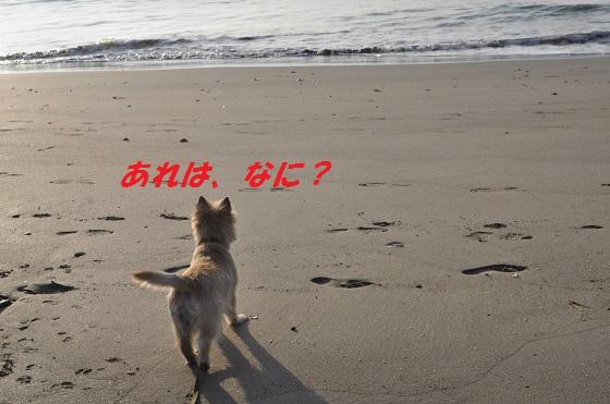 20140706御前崎海1