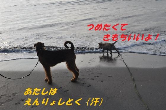 20140706御前崎海11