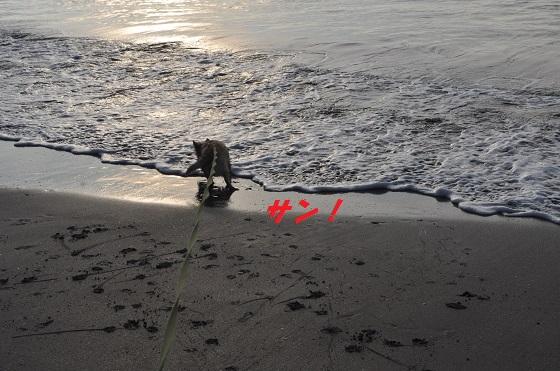 20140706御前崎海9
