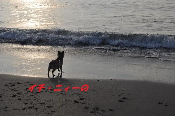 20140706御前崎海8