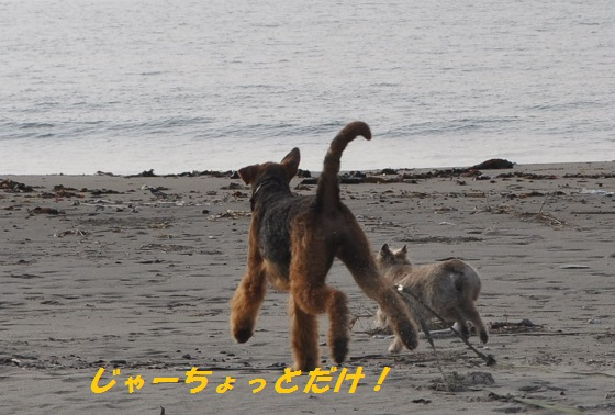 20140706御前崎海13