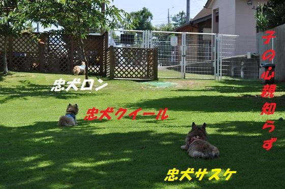 20140727(28).jpg