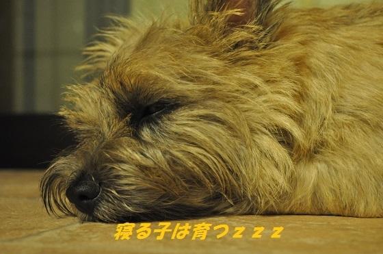 20140804おしおき3