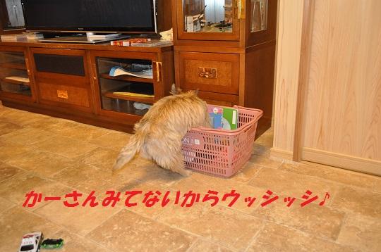 DSC_0532(1).jpg