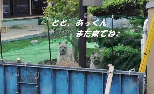 DSC_0600(1).jpg