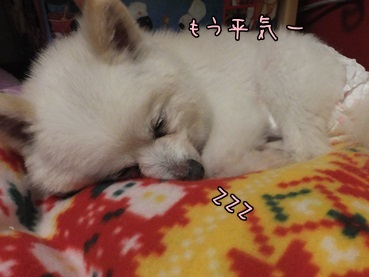 azuki140216_3.jpg
