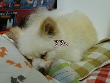 azuki140709.jpg